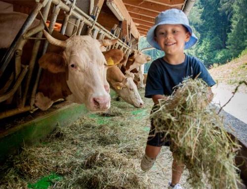 Quelles solutions de formation pour les futurs agriculteurs?